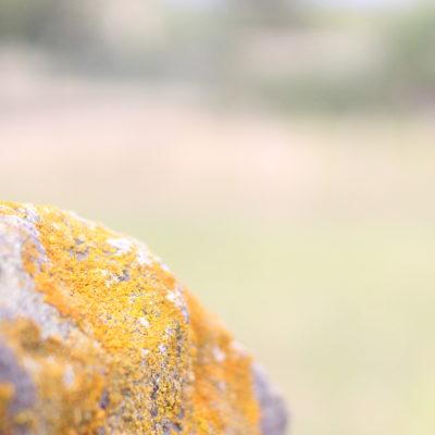 5 idées de photographies à faire cet automne